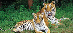 Karnataka Wildlife Travel Package