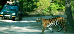 Chikmagalur Hill Station Travel Package
